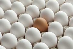 Organic white eggs and one brown in carton crate Stock Image