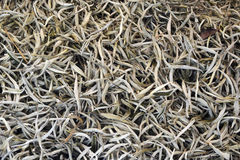 Organic white Tea Stock Photo