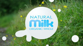 Organic whole milk. stock video