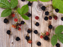 Organic wild blackberries on rustic wooden boards. Overhead view of wild blackberries and leafs on rustic wood Royalty Free Stock Photo