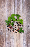 Organic wild blackberries on stressed wooden boards. Overhead view of wild blackberries and leafs on rustic wooden boards in vertical format Stock Image