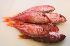 Organic wild fish. Adriatic red wild fish. Croatia stock image