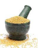 Organic Yellow Mustard & x28;Brassica alba& x29; on marble pestle. Stock Image