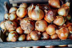 Organic Yellow onions in a basket. Shallots on wooden box.  Harv Stock Photos
