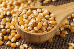 Organic Raw Yellow Corn Kernels Stock Image