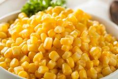Organic Yellow Steamed Corn Stock Photography