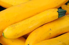 Organic  yellow zucchini Royalty Free Stock Images