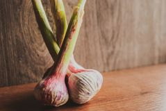 Organic young garlic on wooden board with copy space. Rustic style Royalty Free Stock Photography