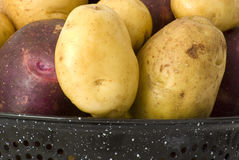 Organic Yukon Gold & Blue Potatoes Stock Images