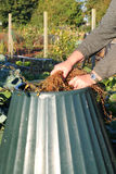 Organically composting closeup. royalty free stock images