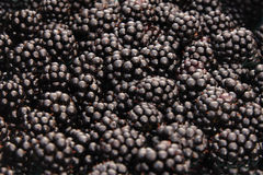 Organically grown blackberries. Close-up of fresh, organically grown blackberries Royalty Free Stock Photos