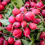 Organically Grown Bunches of Radishes on Sale at Market Royalty Free Stock Image