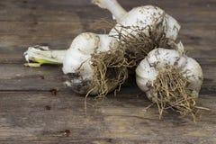 Organically grown garlic Royalty Free Stock Photography