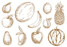 Organically grown tropical, garden fruits sketches Stock Photos