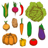 Organically grown vegetables colorful sketches Royalty Free Stock Photos