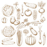 Organically healthy vegetables retro sketches Royalty Free Stock Photography