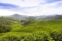 Tea Plantations Cameron highlands Malaysia Royalty Free Stock Image