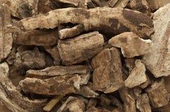 Organico asciughi le cortecce dell'indiano Jalap (turpethum di Operculina) Fotografia Stock