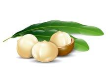 Organico naturale del fondo bianco delle noci di macadamia Immagini Stock Libere da Diritti
