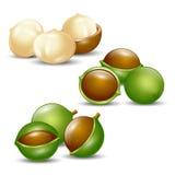 Organico naturale del fondo bianco delle noci di macadamia Fotografia Stock