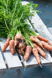 Organics carrots. Royalty Free Stock Photography