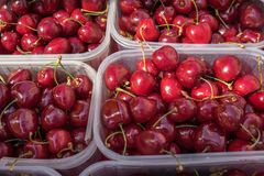 Organics cherries in plastic boxes sold at local city market. Provence. France stock photo