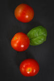Organics Tomatoes and basil Stock Photography