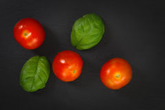 Organics Tomatoes and basil Royalty Free Stock Photography