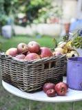 organiczne czerwone jabłko Obrazy Stock