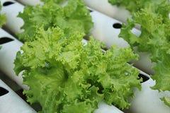 organiczne warzywa Obrazy Stock