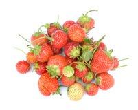 Organicznie świeża truskawka Zdjęcie Royalty Free