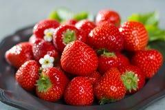 Organicznie świeża truskawka Czerwona truskawka i okwitnięcie truskawka Fotografia Stock