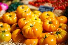 Organicznie świezi pomidory od śródziemnomorskich rolników Obrazy Stock