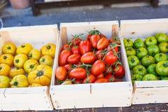 Organicznie świezi pomidory od śródziemnomorskich rolników wprowadzać na rynek w Prov Zdjęcie Stock