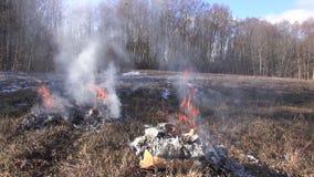 Organicznie banialuki w kartonach pali w polu zbiory