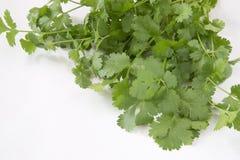 Organicznie cilantro zdjęcia royalty free