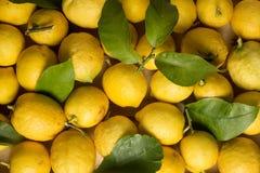 Organicznie cytryny z liśćmi i trzonami Zdjęcie Stock