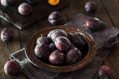 Organicznie Dojrzałe purpury Przycinają śliwki Obraz Stock