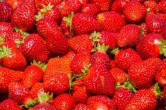 organicznie dojrzałe truskawki Zdjęcia Royalty Free