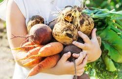 Organicznie domowej roboty veggies w rękach dziecko Selekcyjna ostrość obrazy stock