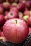 Organicznie Galowy Apple Obraz Royalty Free