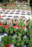 Organicznie garnka ogrodnictwo zdjęcie stock