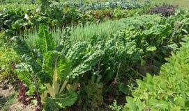 Organicznie Gospodarstwo rolne Obrazy Stock