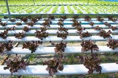 Organicznie gospodarstwo rolne Obraz Stock
