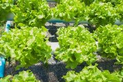 Organicznie gospodarstwo rolne Zdjęcia Royalty Free