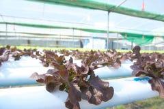 Organicznie gospodarstwo rolne Fotografia Stock