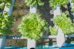 Organicznie gospodarstwo rolne Zdjęcie Stock