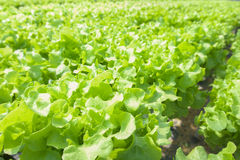Organicznie gospodarstwo rolne Zdjęcie Royalty Free