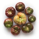 Organicznie heirloom pomidory w okręgu zdjęcia royalty free