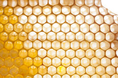 Organicznie honeycomb tekstura z świeżym miodem Fotografia Royalty Free